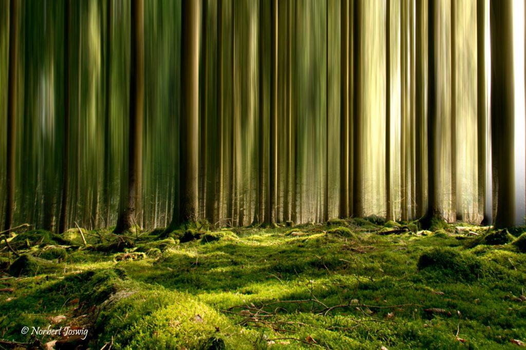 Fotografie: Bildbearbeitung / Naturfotografie
