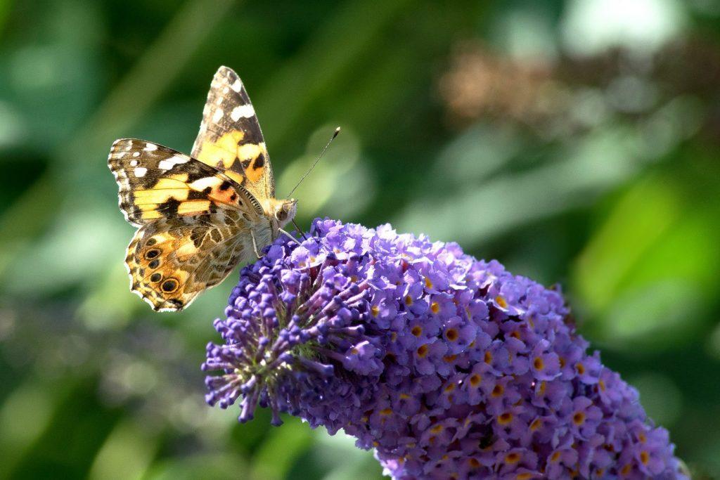 Fotografie: Naturfotografie